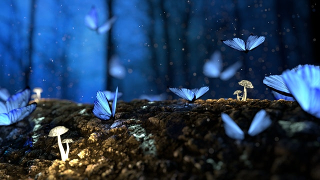 What Are Wiccan Beliefs? image of butterflies and mushrooms on a wooden log