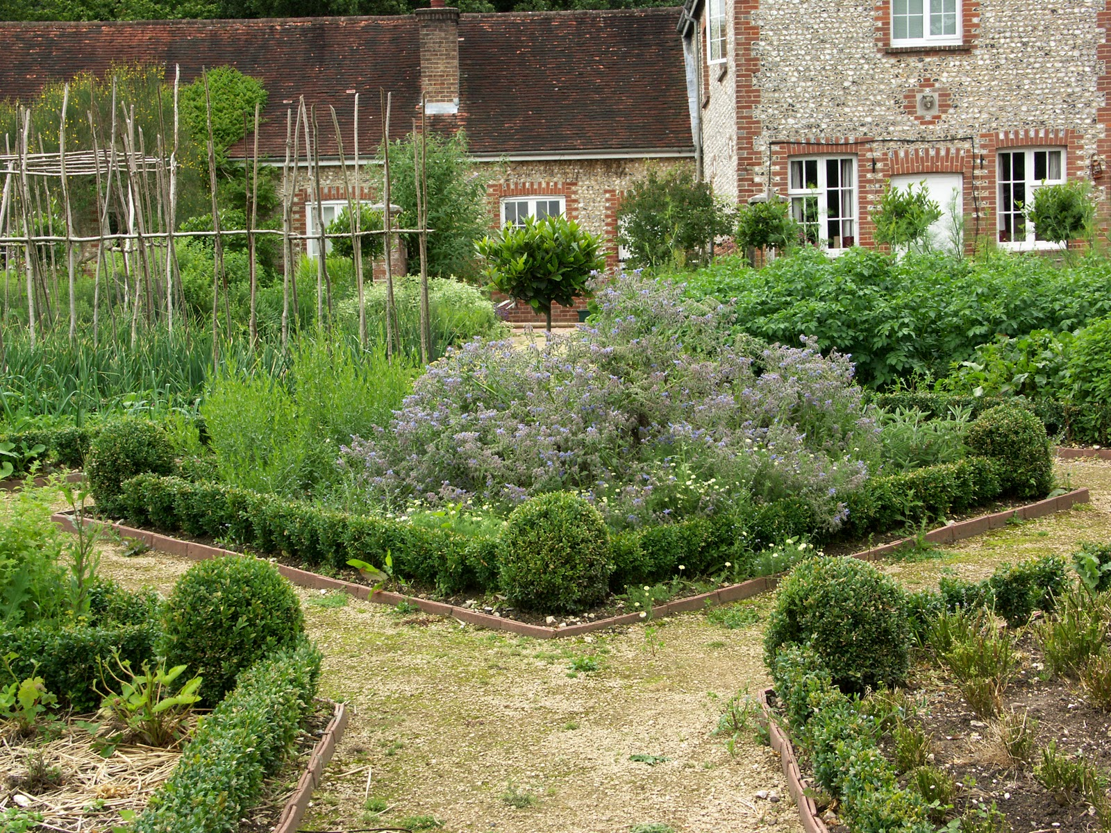 kitchen herb garden filled with healing herbs