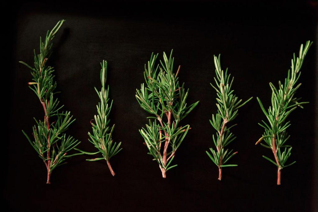 5 Rosemary stems