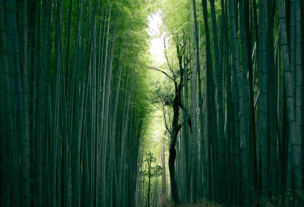 Herbs for luck bamboo forest
