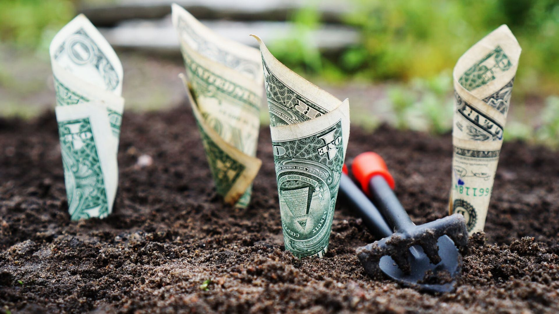 money herbs title image money growing in the ground