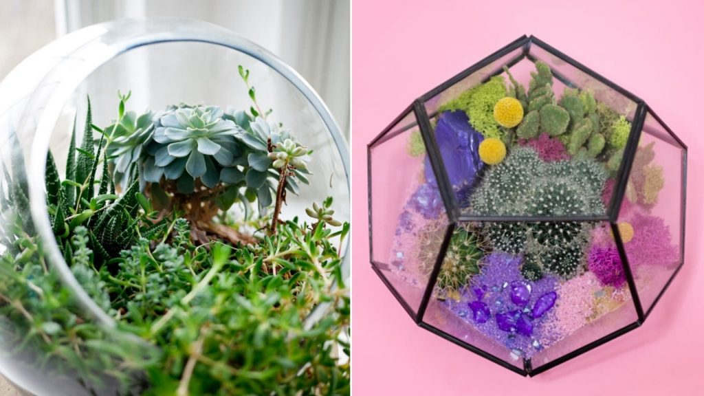 terrarium as a witch's garden