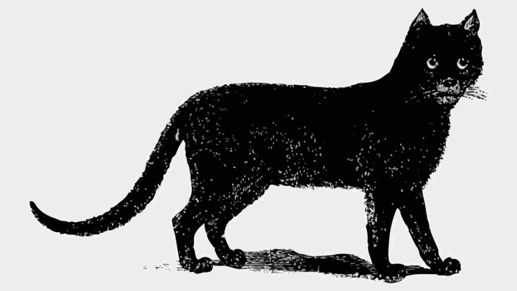 The Black Cat as a Witches Familiar