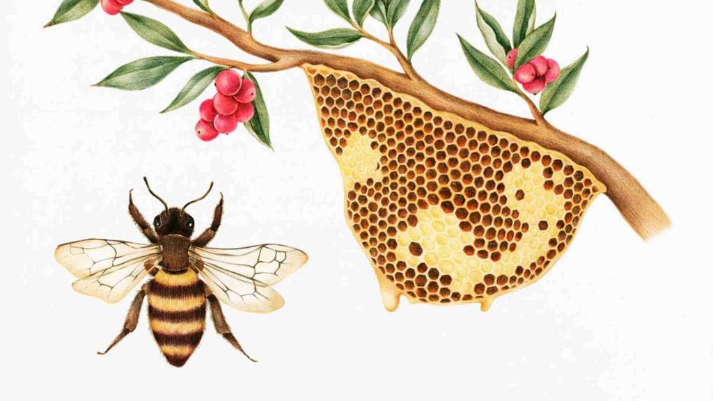 drawing of honey bee with hive hanging from a branch with red berries