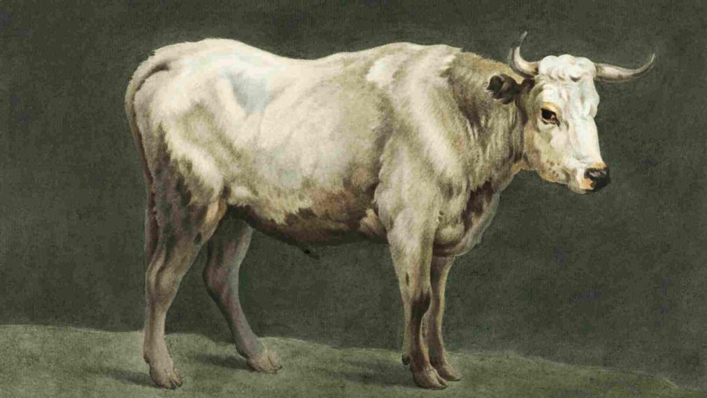 Drawing of a bull against a green background