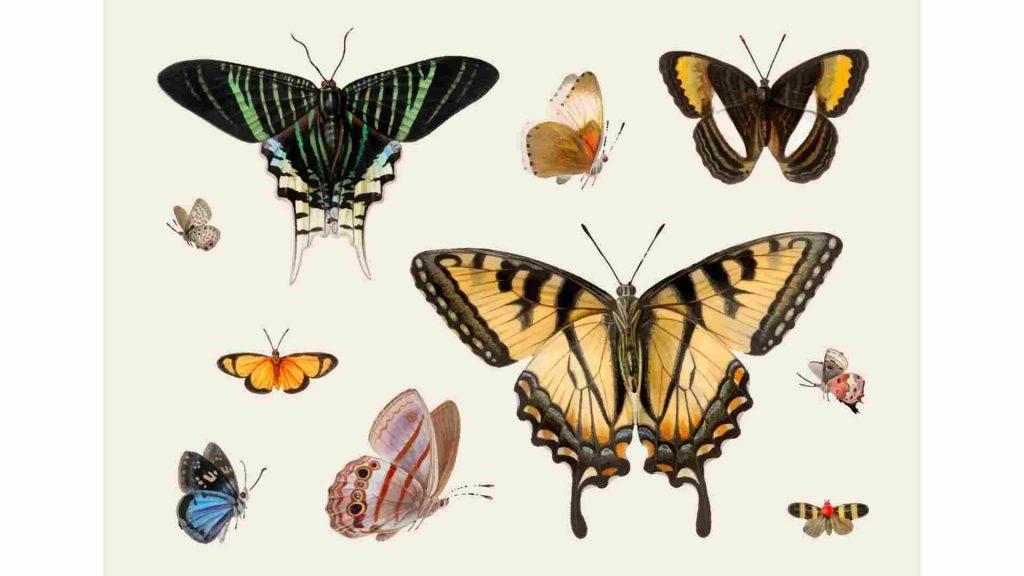 various types of butterflies on a light green background
