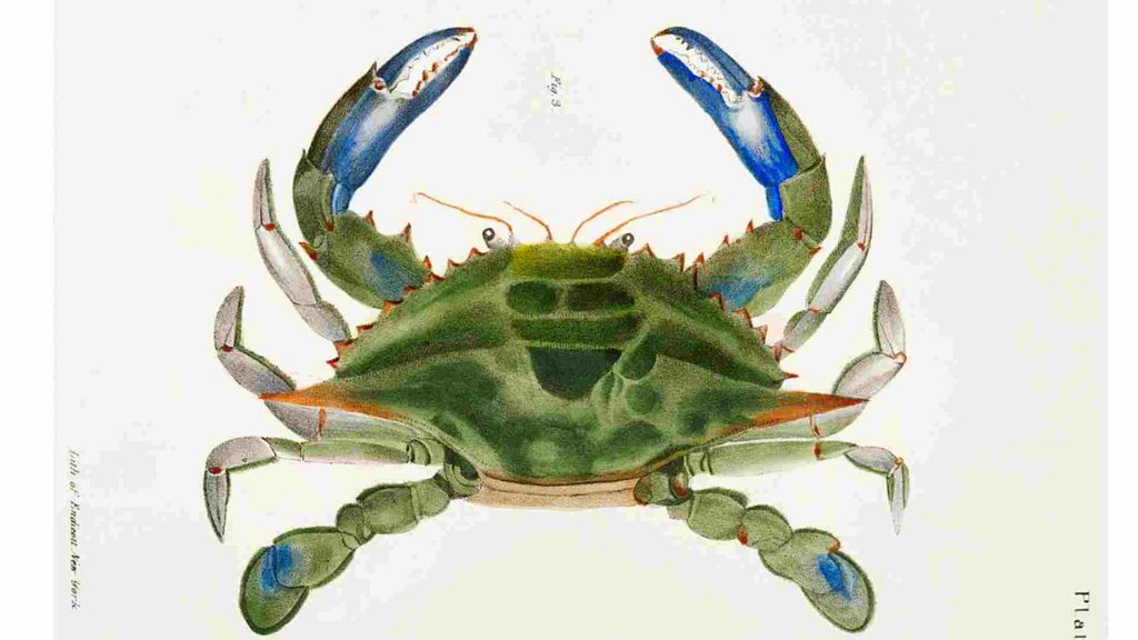 drawing of a crab with green shell and blue claws