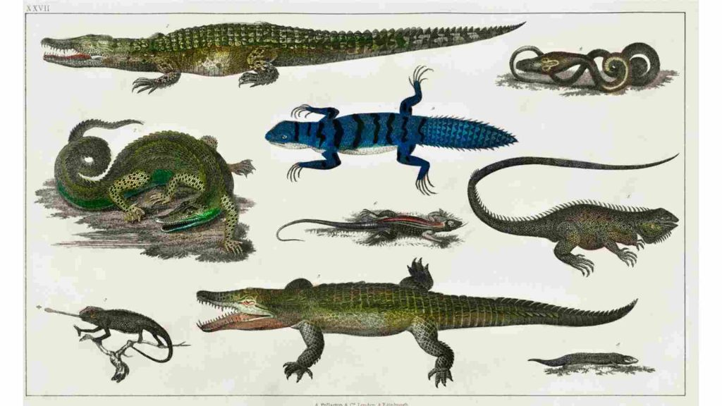 drawing of various different types of crocodiles