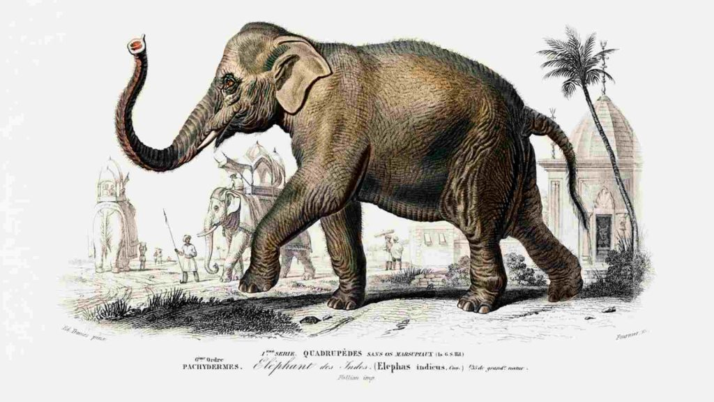 drawing of an elephant walking with a palm tree and a building behind it