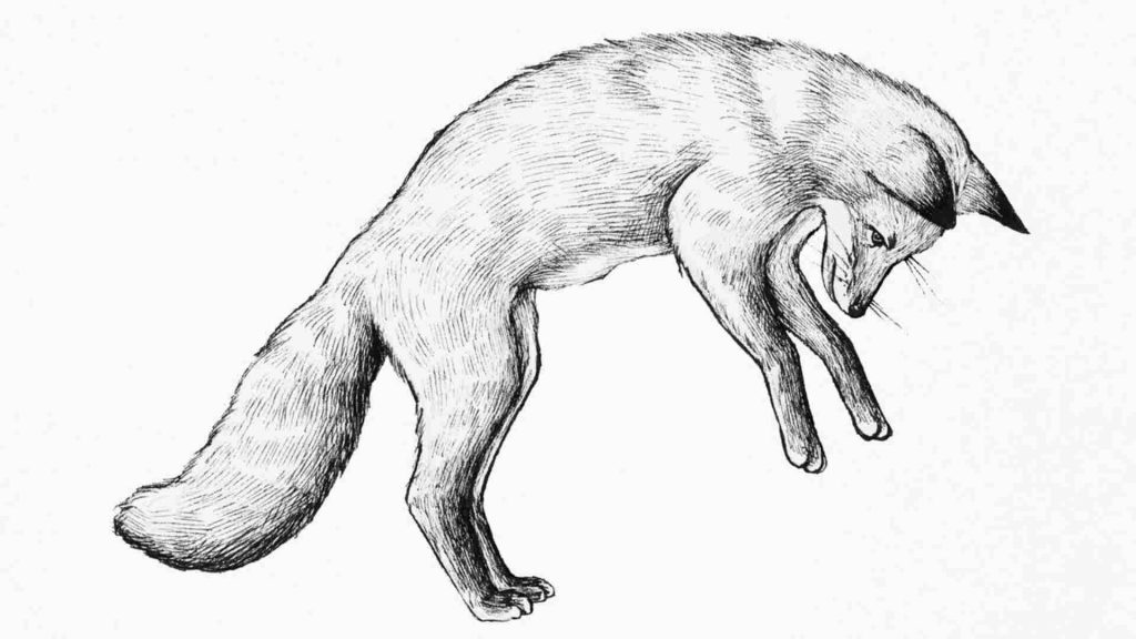 black and white drawing of a fox pounching
