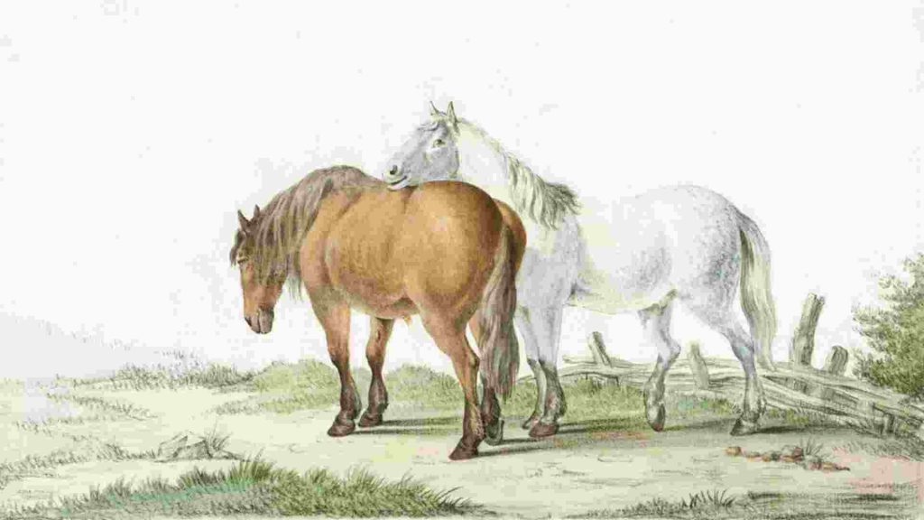 a brown and a white horse standing in a field with green grass