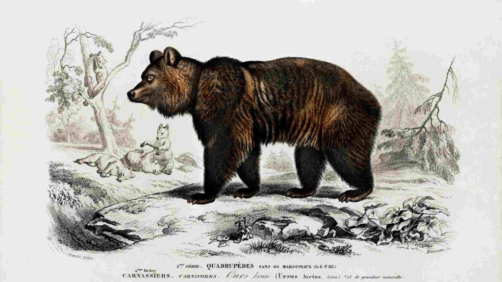 Bear in the forest as witches familiar