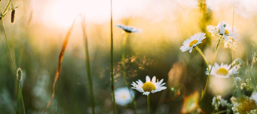 litha image summer meadow