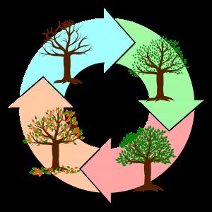 wheel of the year seasons