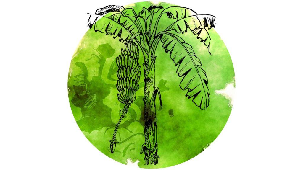 magickal plants #2 banana illustration against green circle