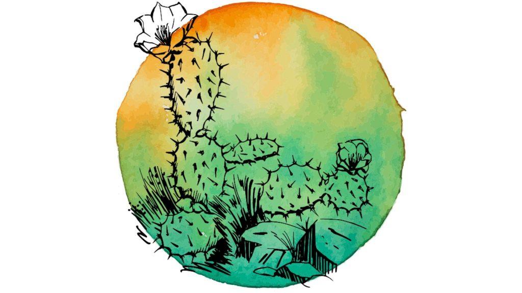 magickal plants #3 cacti