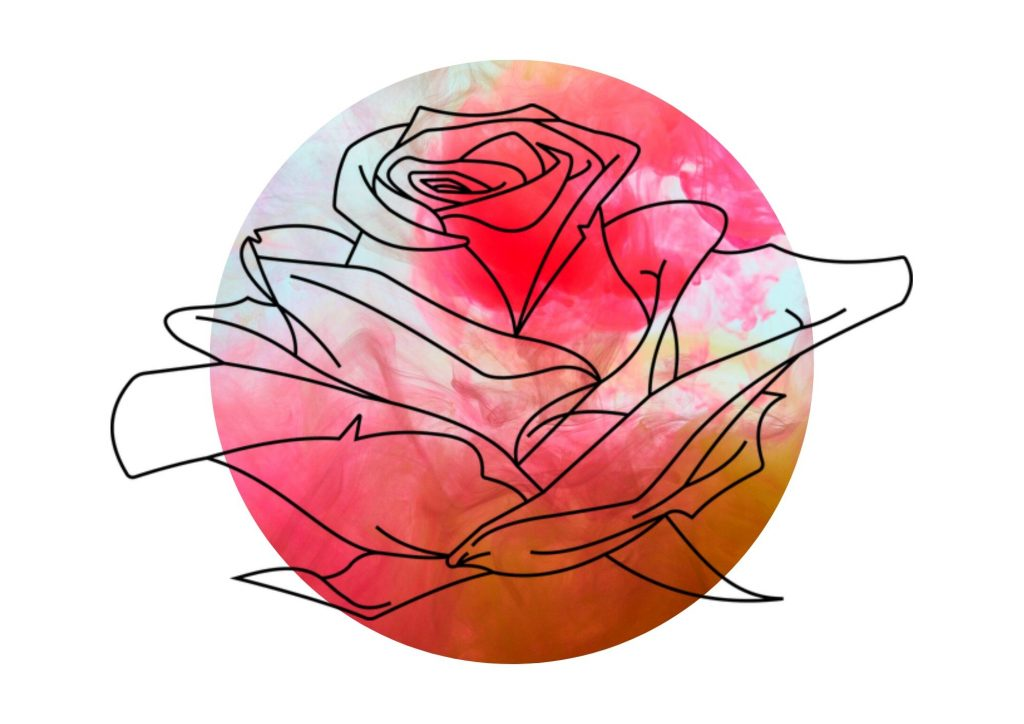 illustrated rose against pink background for ingredients for love spells #1 rose