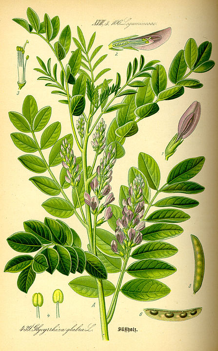 herbs for anxiety #6 liquorice root