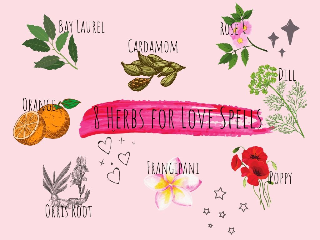 8 key herbs for love spells illustrated in colour with a pink background