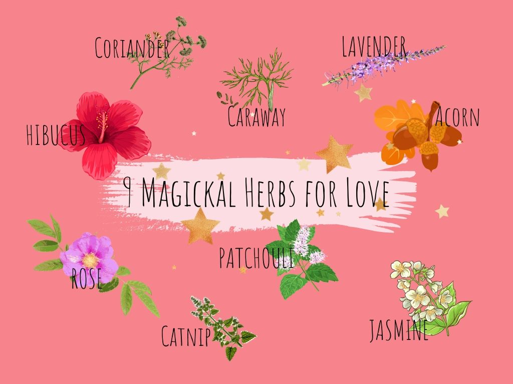 9 magickal herbs for love surrounded by images of all 9 herbs in colour with a pink background