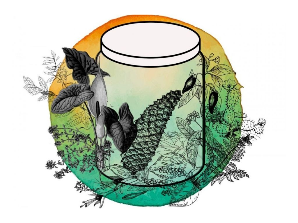 clear jar against yellow and green background with plant illustrations placed around the jar
