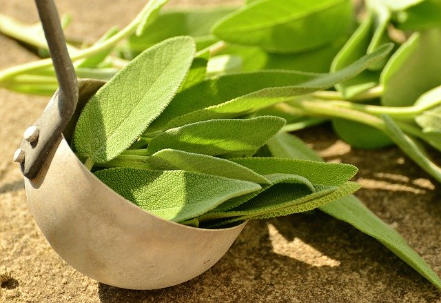 fresh sage leaves in a ladle