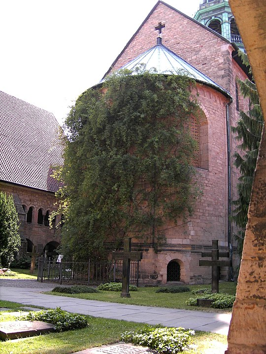hildesheim cathedral germany 1000 year old rose