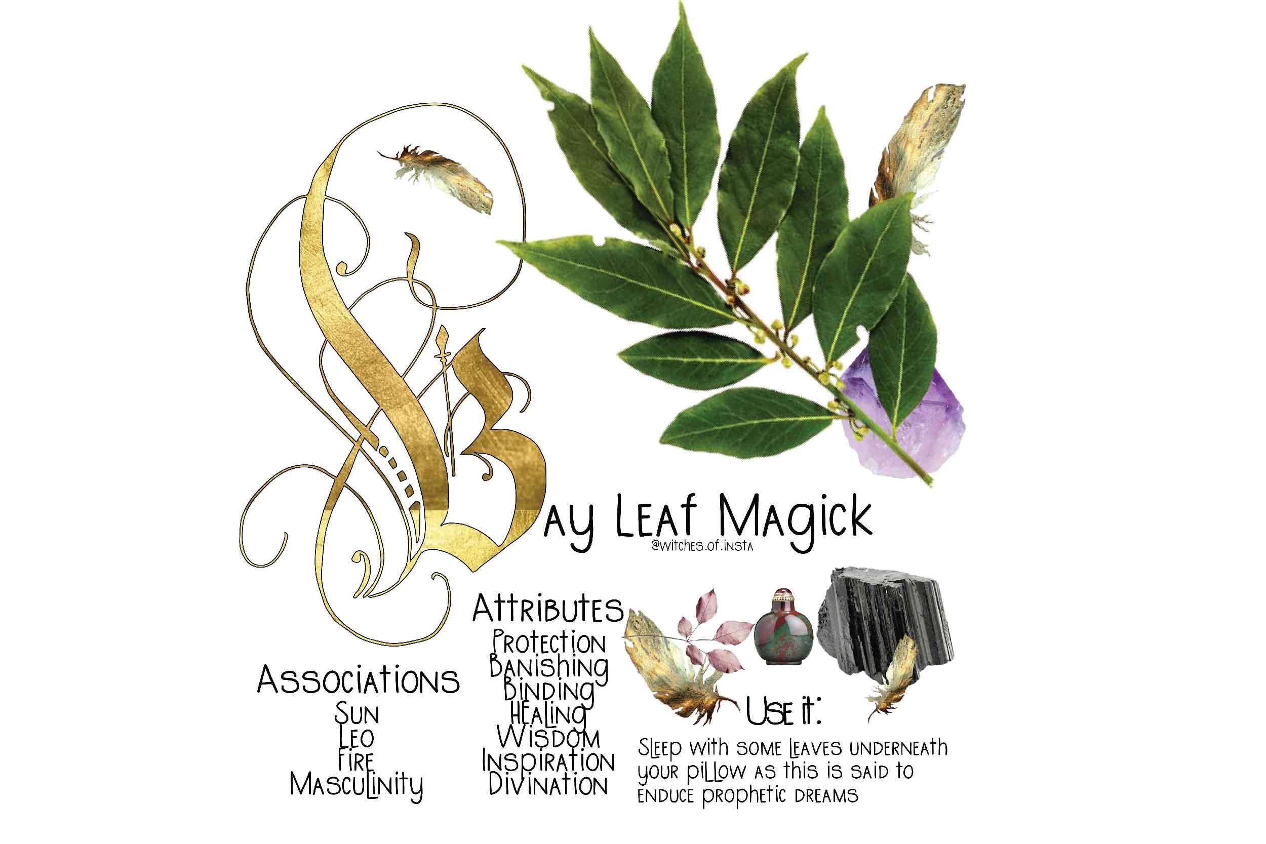 Bay Leaf Magick