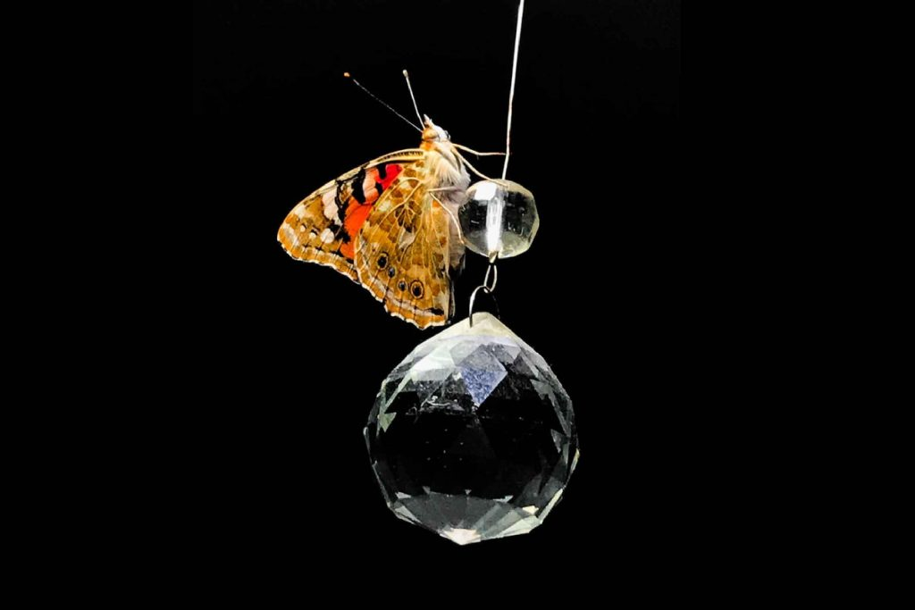 Butterly resting on a crystal
