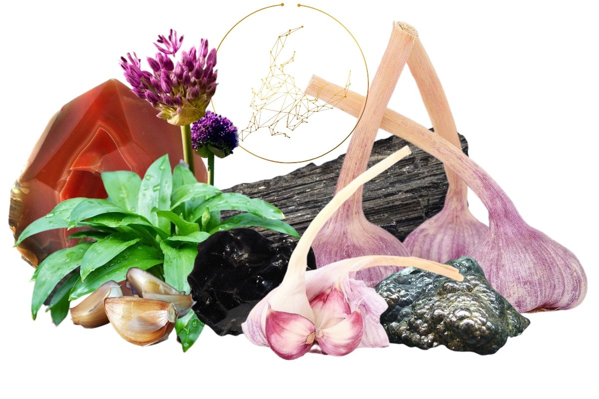 various types of garlic with crystals and garlic flowers for the magickal properties of garlic feature image