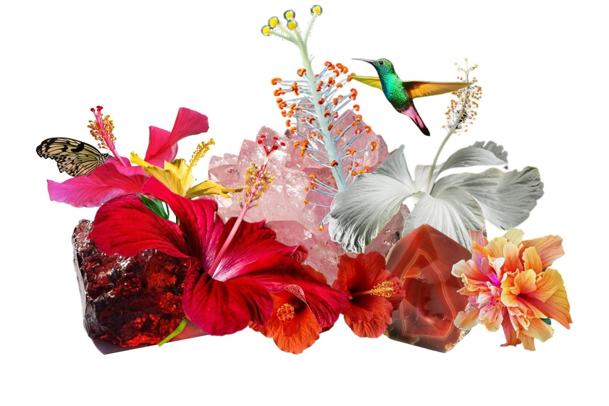 hibiscus with crystals, a butterfly and hummingbird