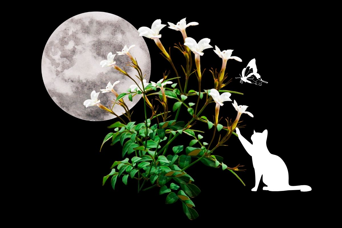 jasmine on black background with moon and cat