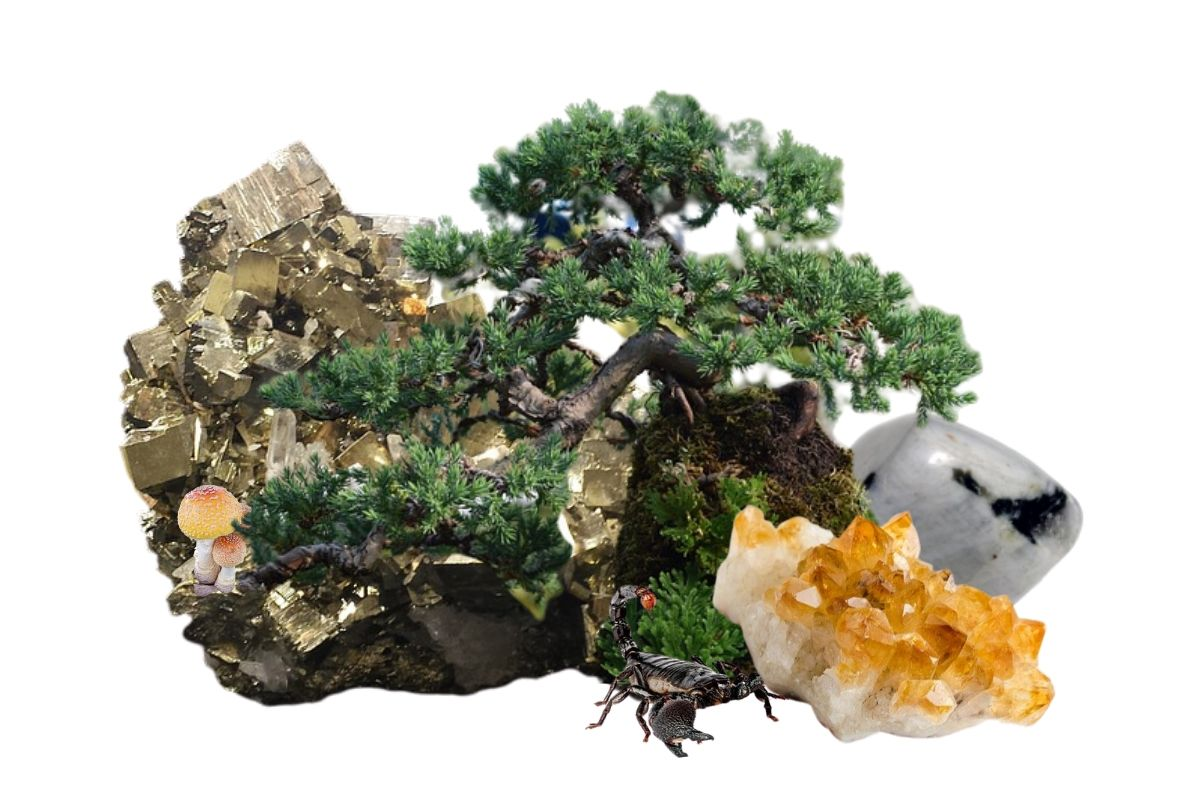 pine tree bonsai with crystals mushrooms and scorpion