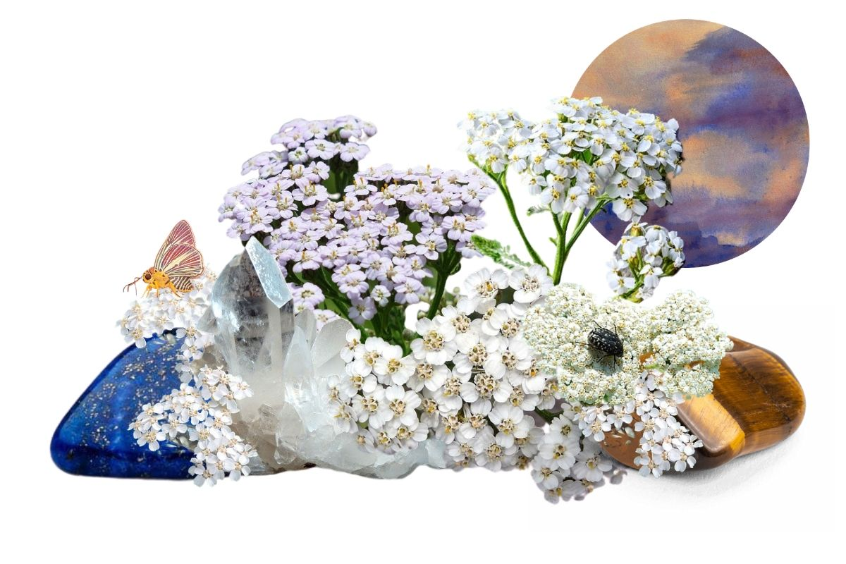 yarrow flowers with crystals and insects for magickal properties of yarrow feature image