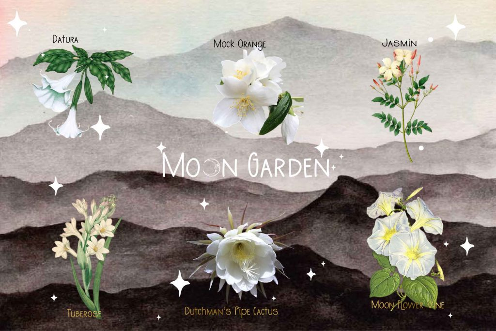 moon garden plants illustration