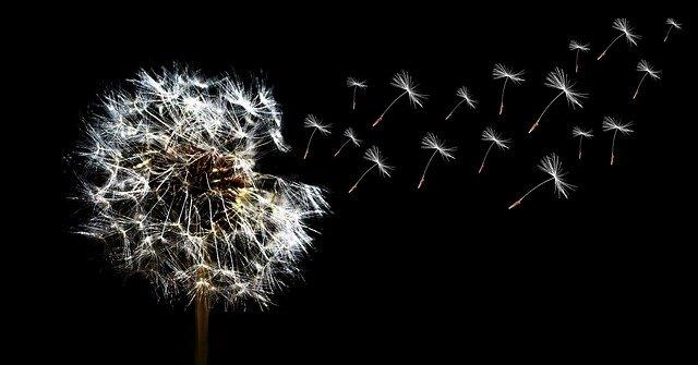 magickal properties of dandelion