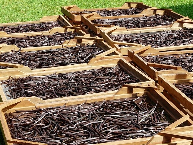 vanilla drying in the sun for the magickal properties of vanilla
