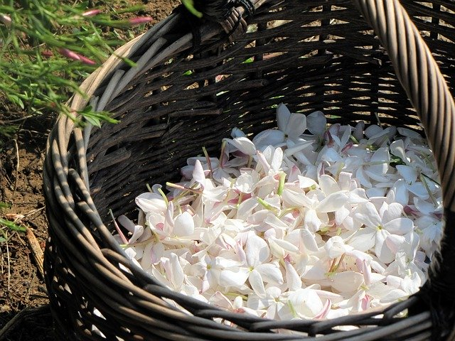 Jasmine flowers in a basket for magickal properties of jasmine