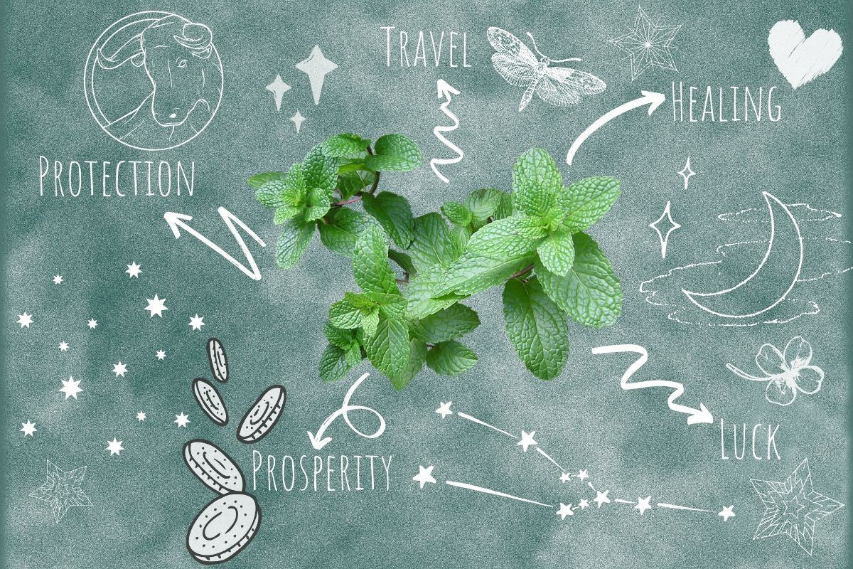 mint with magickal properties around it