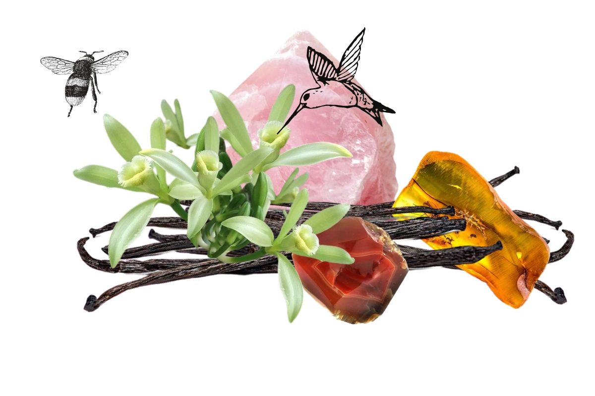 vanilla beans and flowers with corresponding crystals, a hummingbird and a bee