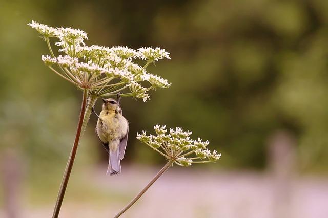 bird on yarrow