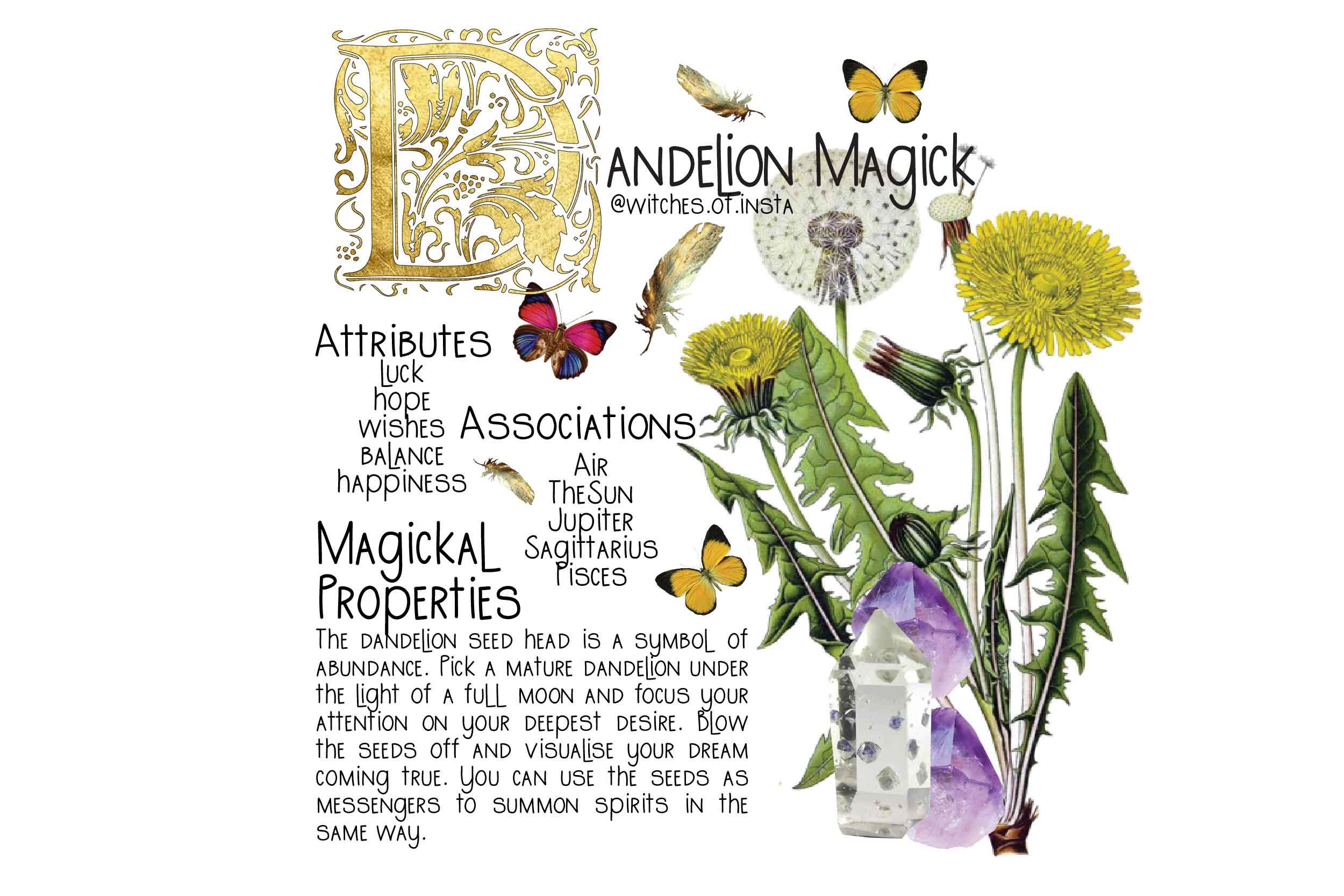Dandelion Magick