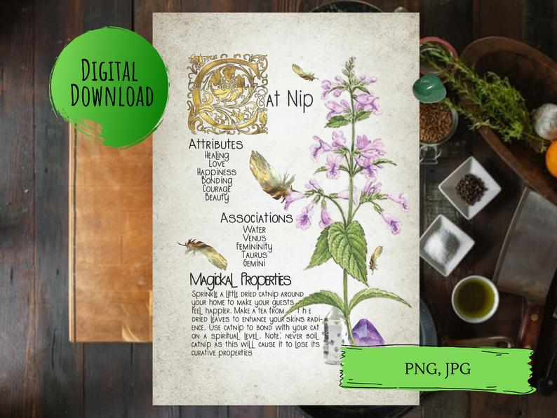 magickal properties of catnip book of shadows page