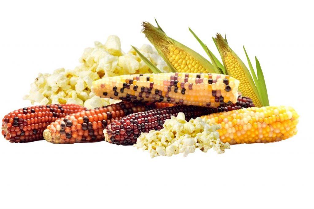 lammas decorations corn