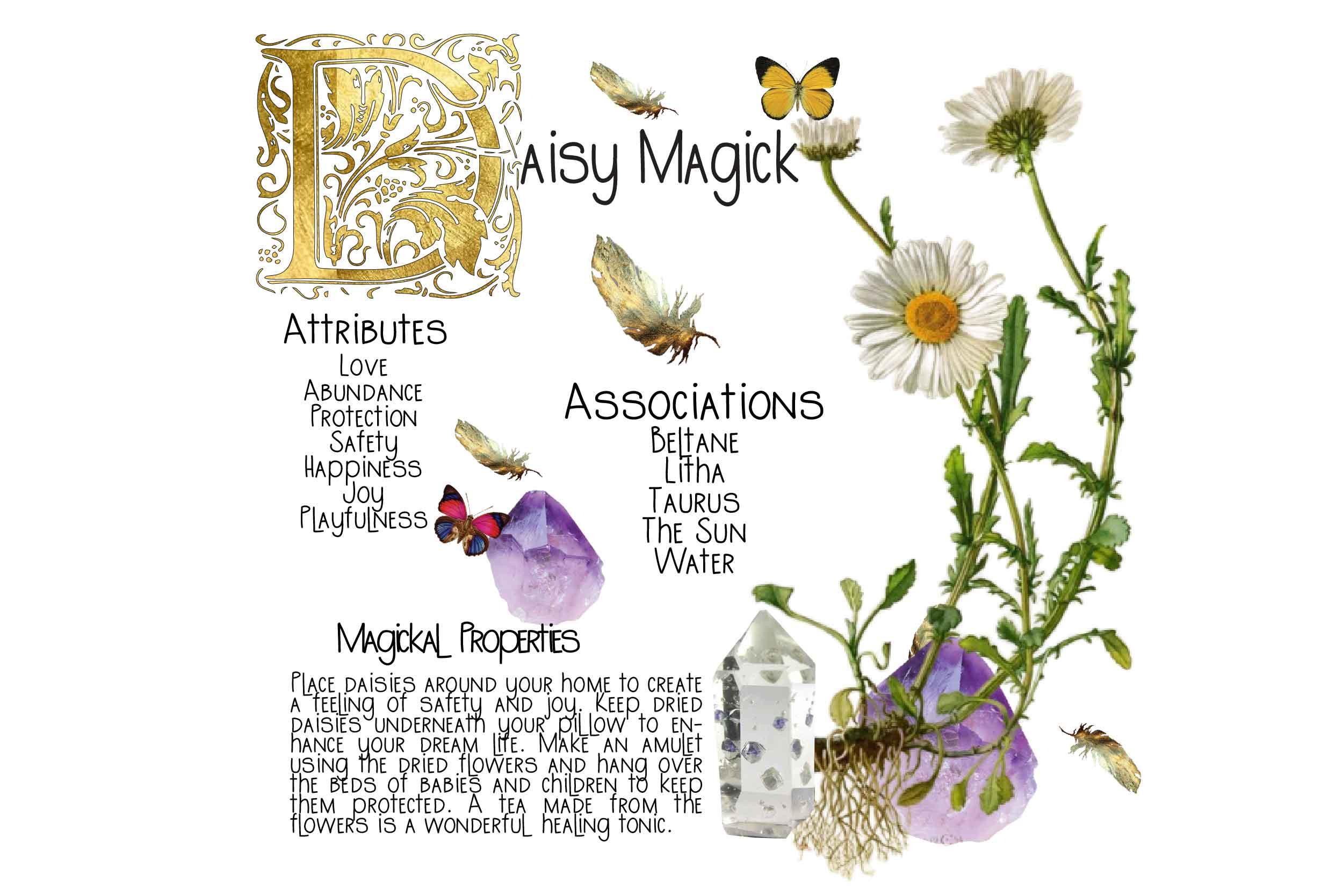 Daisy Magick WP-01