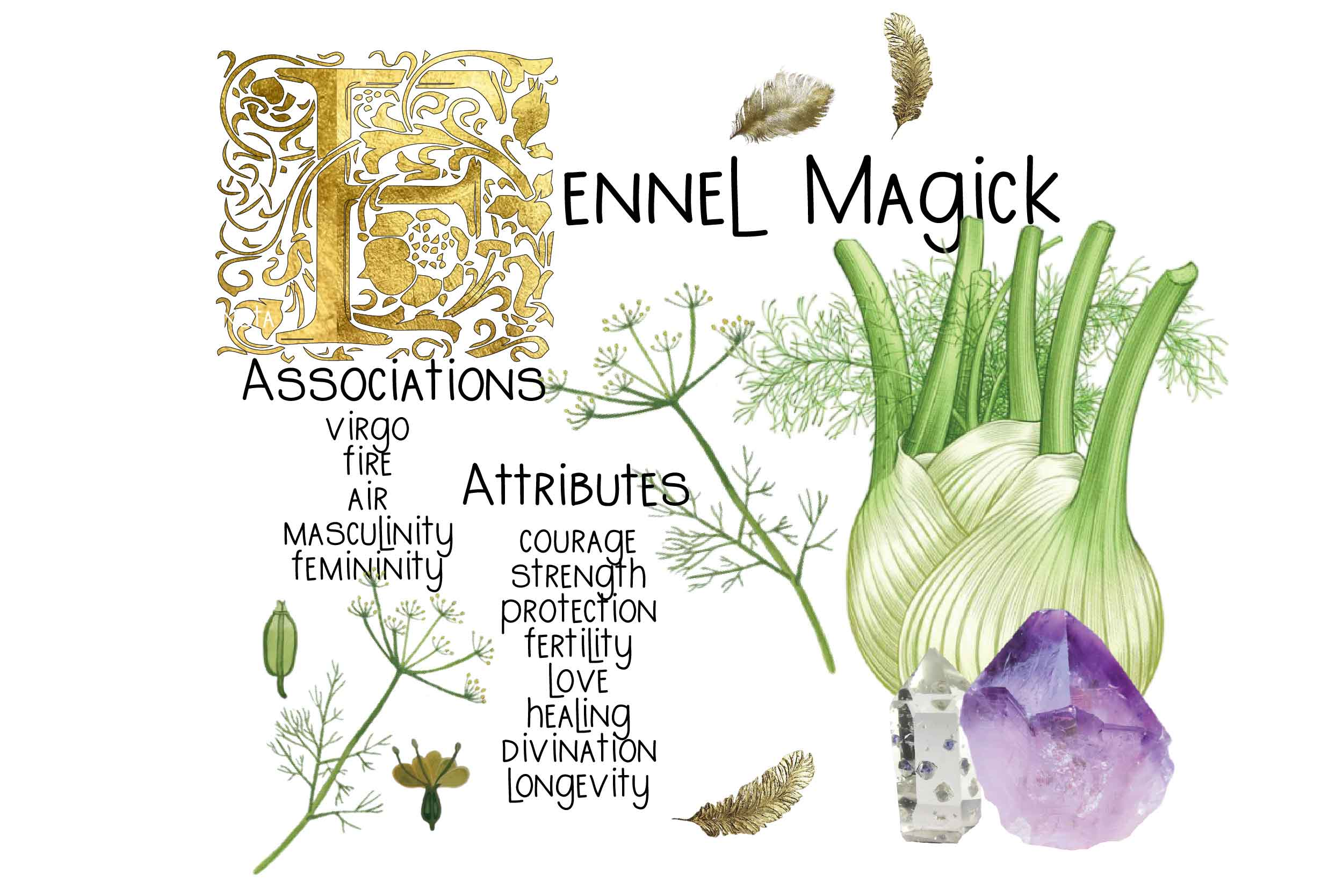magickal properties of fennel illustration