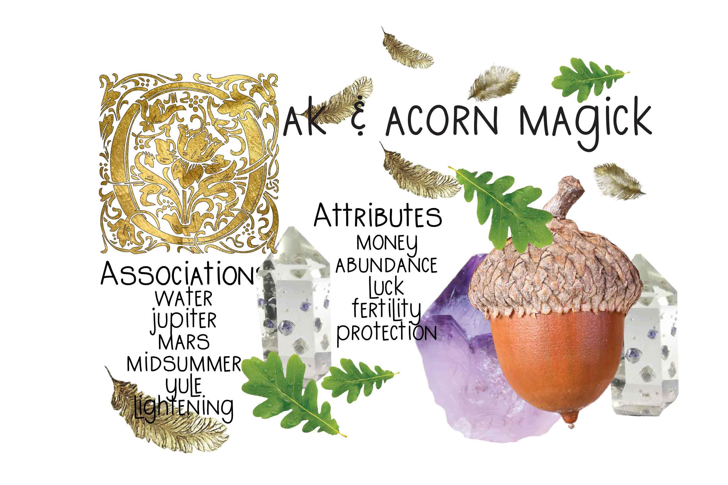 oak and acorn feature image