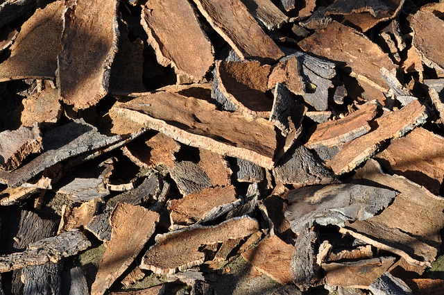 oak bark for medicinal uses