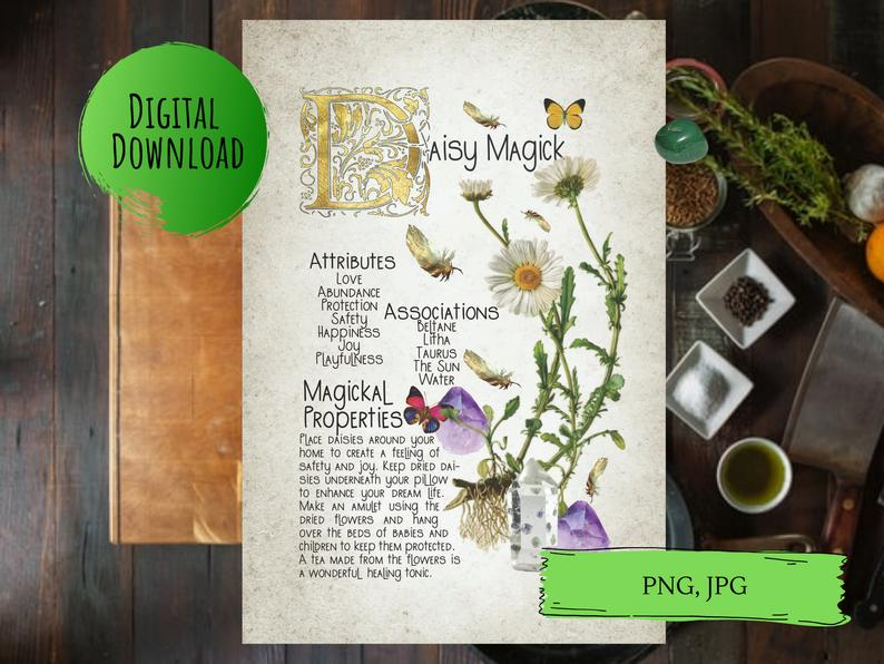 magickal properties of daisies book of shadows page
