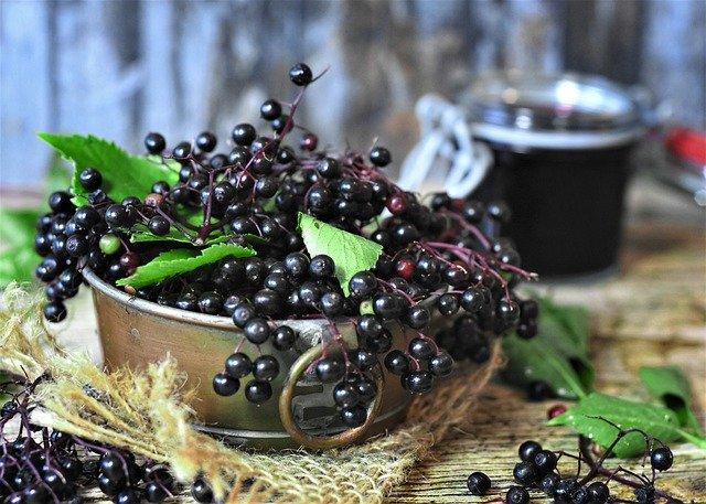 ripe elder berries for the magickal properties of elderberry